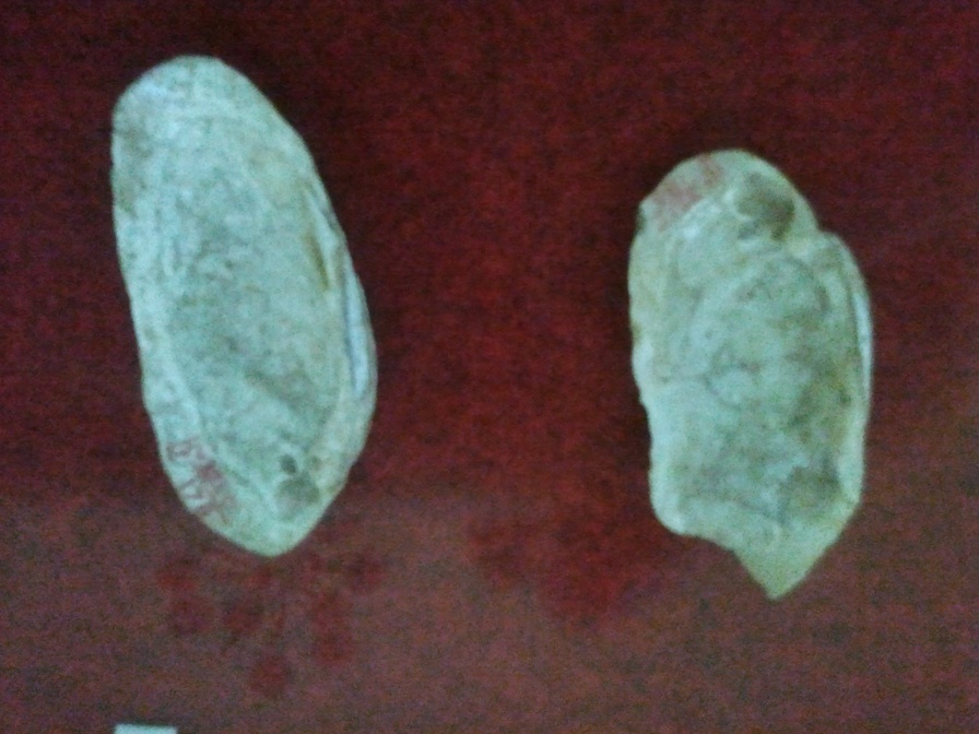 Paléolithique - Galets