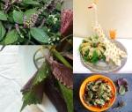 tiato-perilla-frutescens-herbe-nem-recette-vietnam-082015